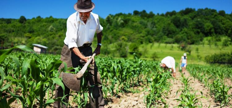 Projeto de Lei que incentiva produtores rurais familiares é aprovado