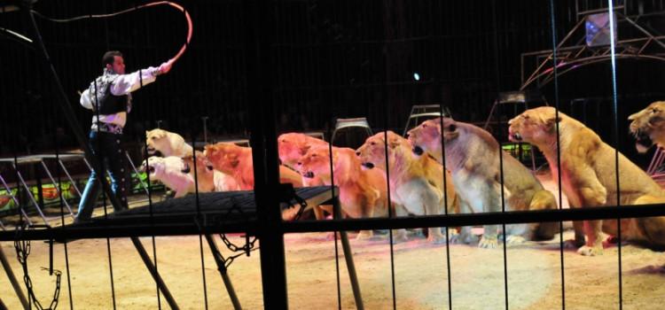 Santa Catarina proíbe uso de animais em espetáculos de circo