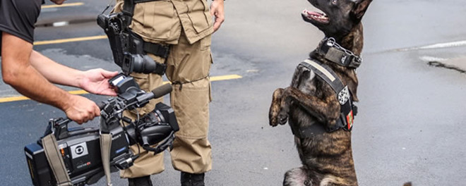 Cão da PM grava participação em documentário do Discovery Channel