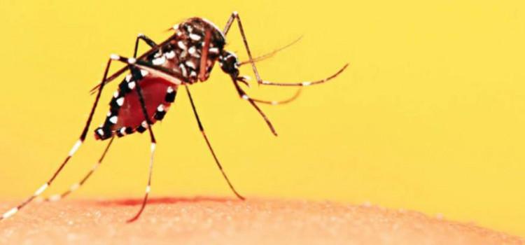 DSPS apoia campanha de vacianação contra a febre amarela