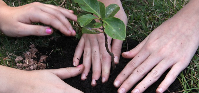 Plantas necessitam de cuidados especiais durante o verão