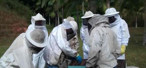 Parceria avalia qualidade do mel produzido na região
