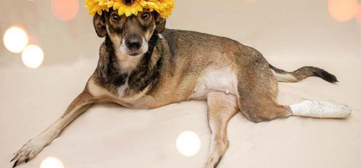 Fotos de cães abandonados e com deficiência viralizam em rede social