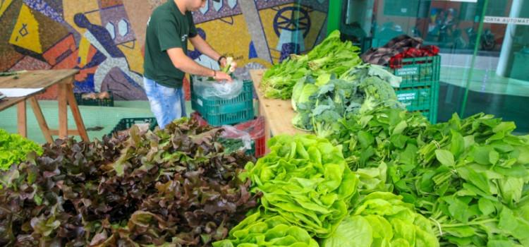 Governo de SC propõe normas para defesa sanitária vegetal