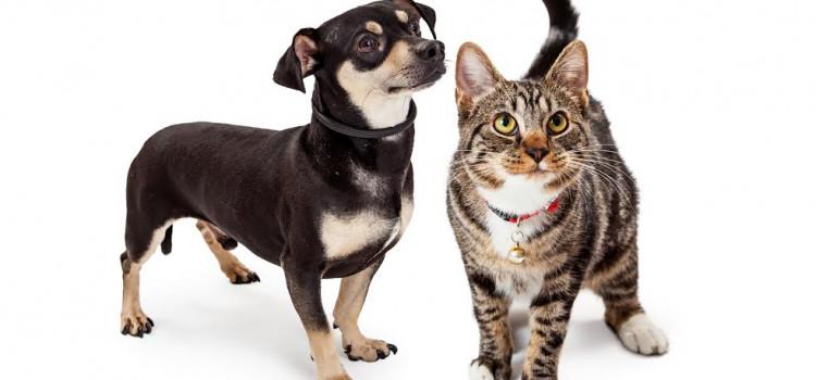 Sábado tem Feira de Adoção de Cães e Gatos no Neumarkt