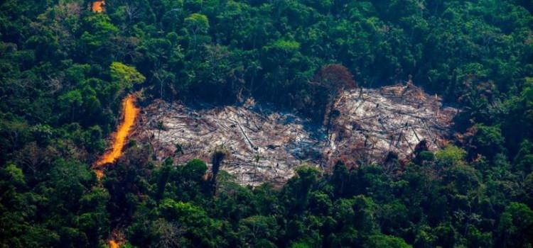 Desmatamento na Amazônia cresce 9,5%