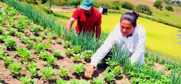 Agricultores familiares têm até dia 27 para participar de edital do Exército