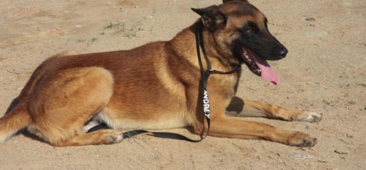 Sancionadas leis sobre animais sencientes