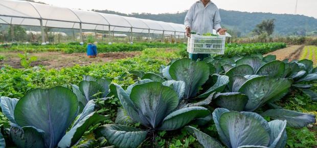 Agricultura familiar responde por metade do faturamento em SC
