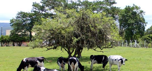 Santa Catarina planeja produzir leite tipo exportação