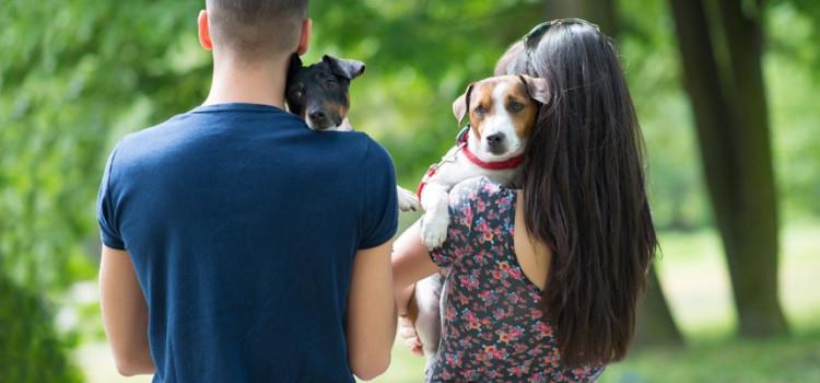 Guarda compartilhada de animais após separação pode virar lei