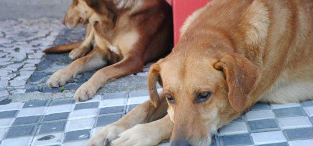 Maus-tratos contra animais pode ser denunciado online