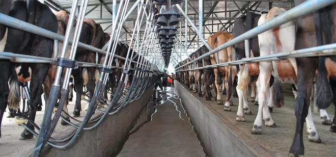 Santa Catarina é o quarto maior produtor de leite industrializado do Brasil