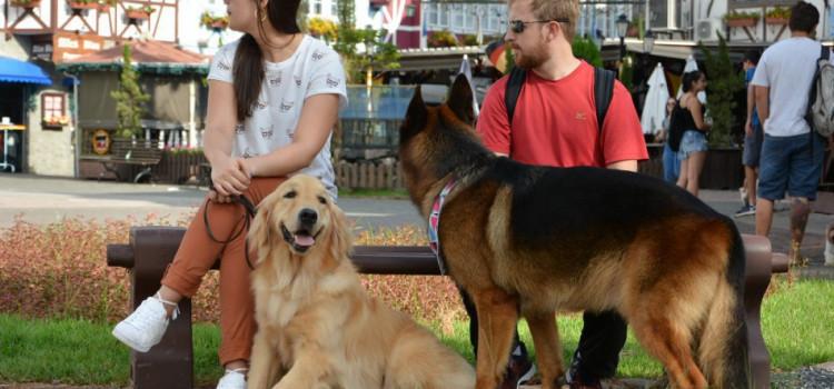 Vila Germânica e Ramiro são aberto para cães por mais um mês