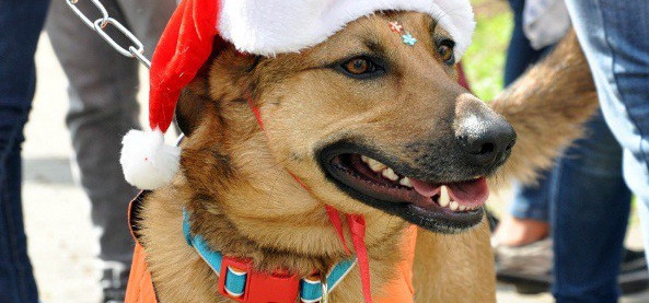 Fim de semana será de Cão no Parque e na Vila de Natal