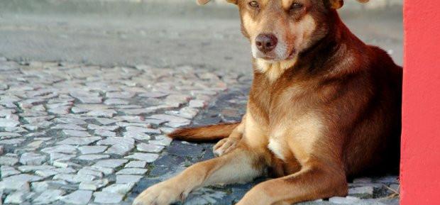 Maus-tratos contra animais podem render R$ 20 mil de multa