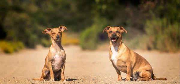 Castração reduz risco de câncer em mais de 90% em cães e gatos